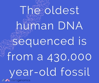 oldest human remains