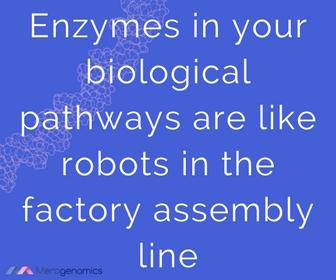 body enzymes