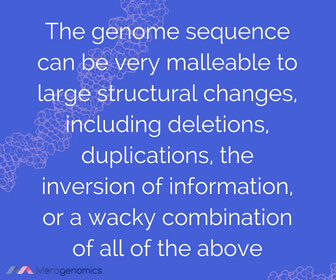 Image of Merogenomics article quote on DNA mapping