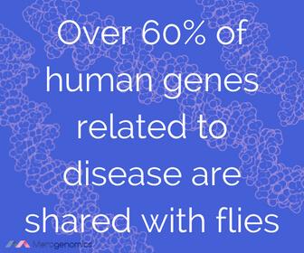 Image of Merogenomics article quote on fruit fly genetics