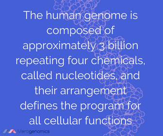 Image of Merogenomics article quote on human genome size
