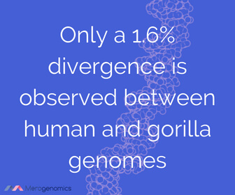 Image of Merogenomics article quote on human evolutionary links