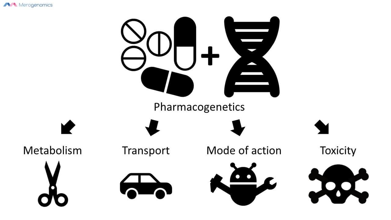Merogenomics infographic on pharmacogenetics