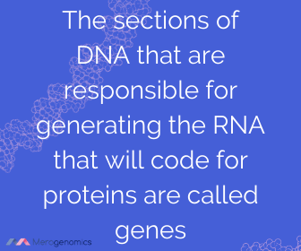 Image of Merogenomics article quote on gene definition