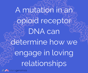 Image of Merogenomics article quote on love influenced by opioid receptor changes