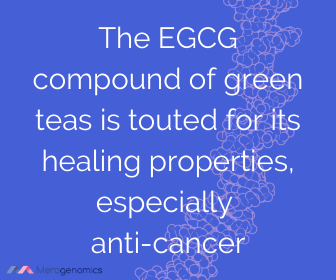 Image of Merogenomics article quote on EGCG green tea anti-cancer compound