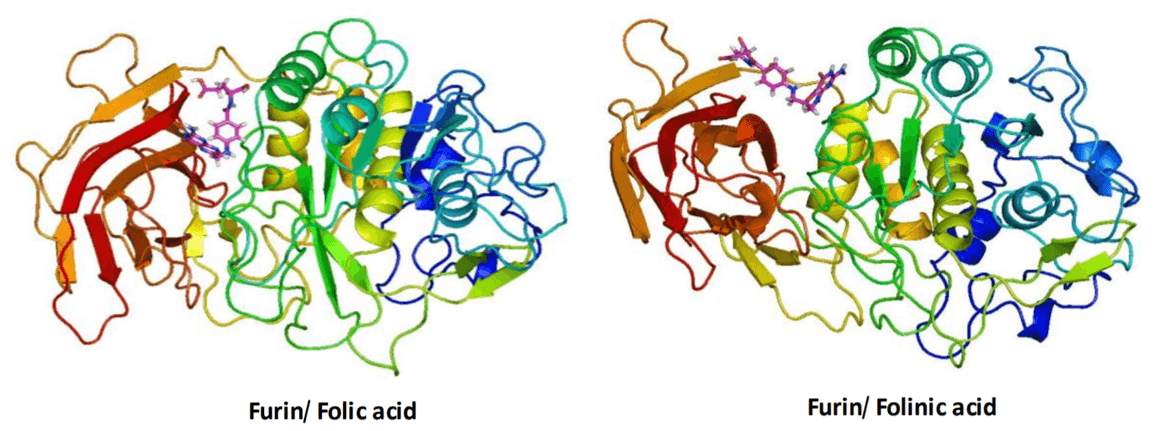 Image of Furin protein bound to Folic Acid