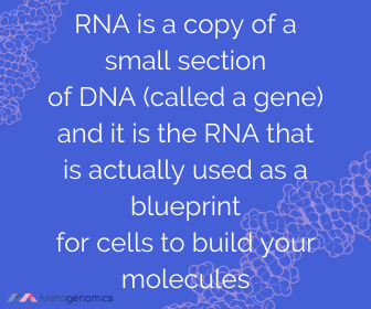 Image of Merogenomics article quote on DNA vs RNA differences