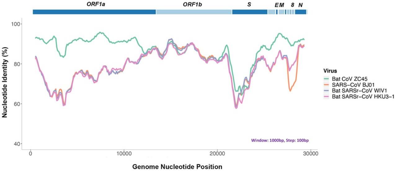 Merogenomics Blog Figure showing coronaviruses identity