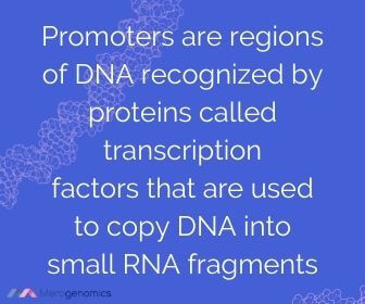 Image of Merogenomics article quote on DNA promoters