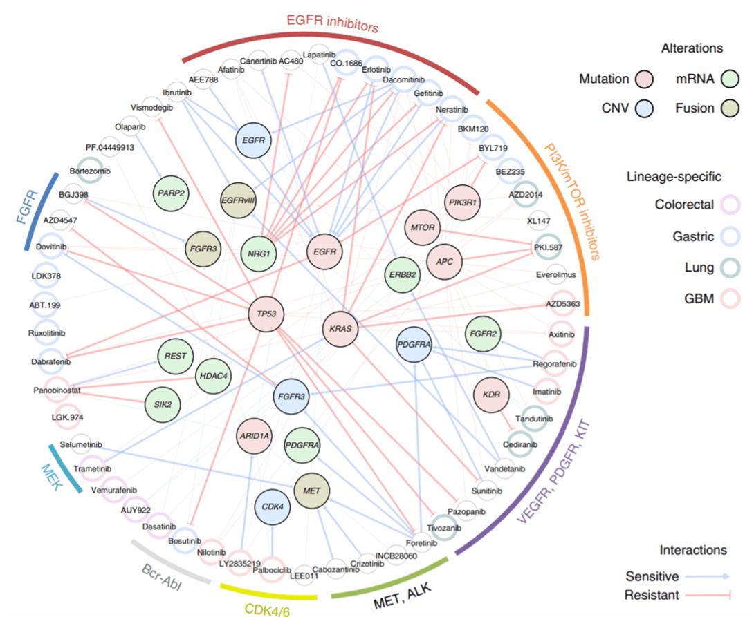 Image of cancer pharmacogenetic map