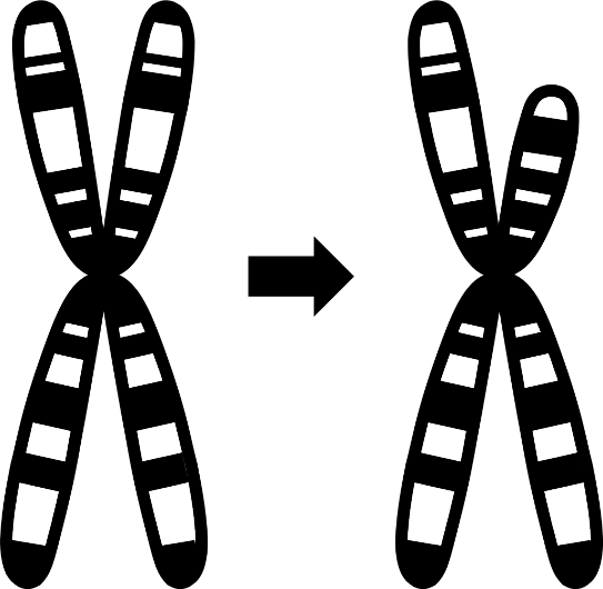Image of Structural Variant icon